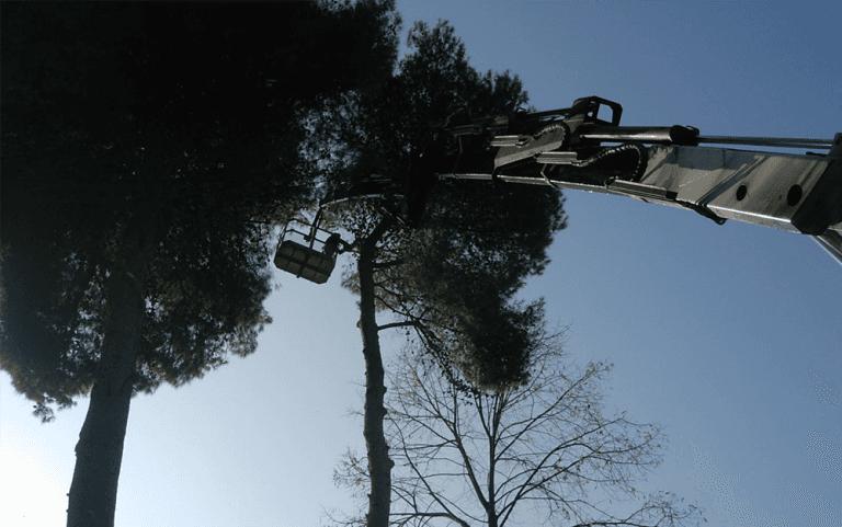 vista dal basso di alberi