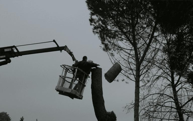 addetto ai lavori manutenzione albero