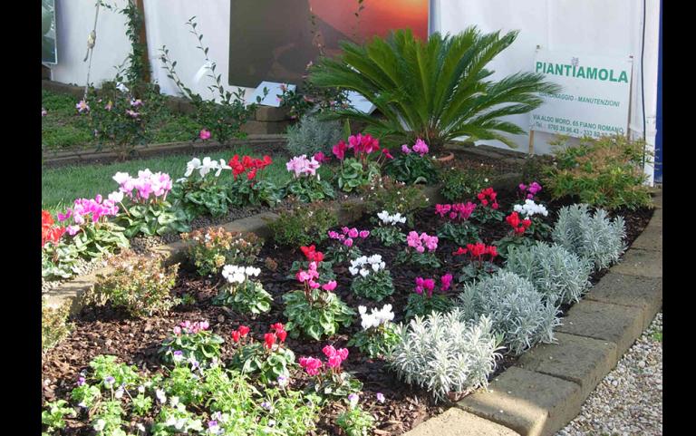 aiuola con fiori colorati