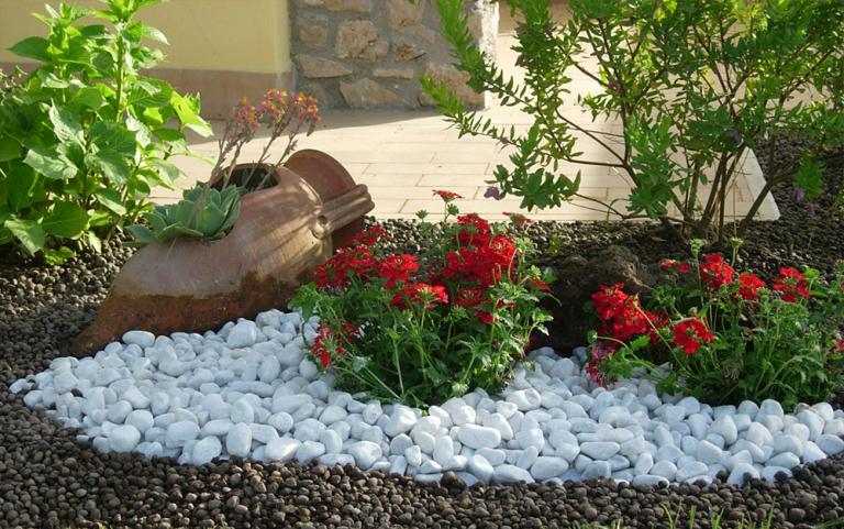 pianta con fiori rossi su ciottoli