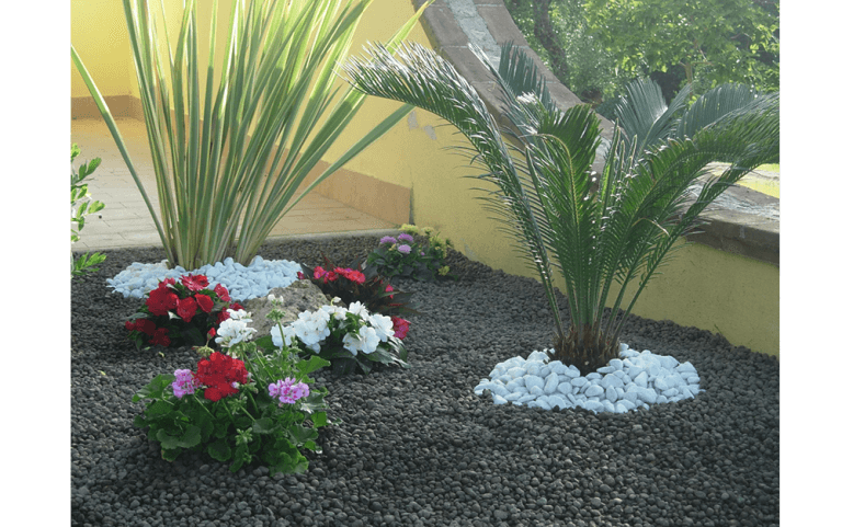 fiori piantati nella ghiaia