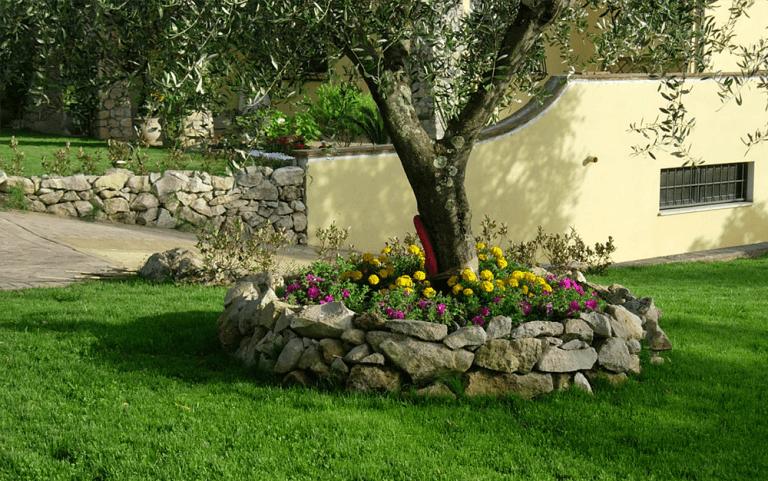 albero all`interno di un recinto