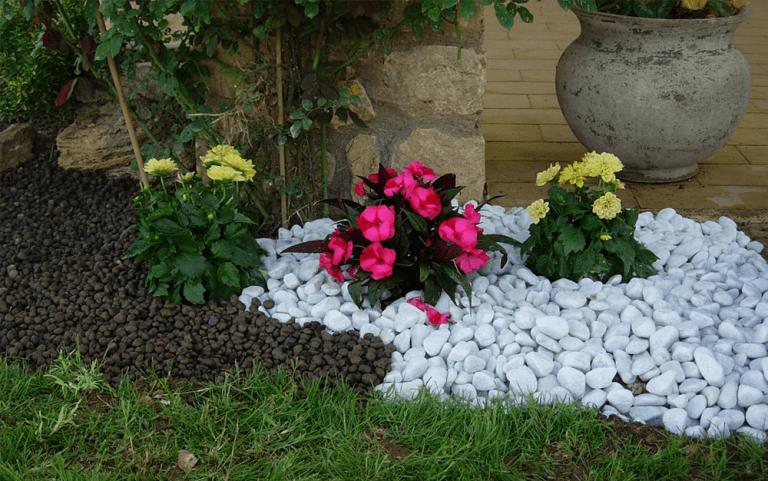 Piante a fiori fucsia e gialli