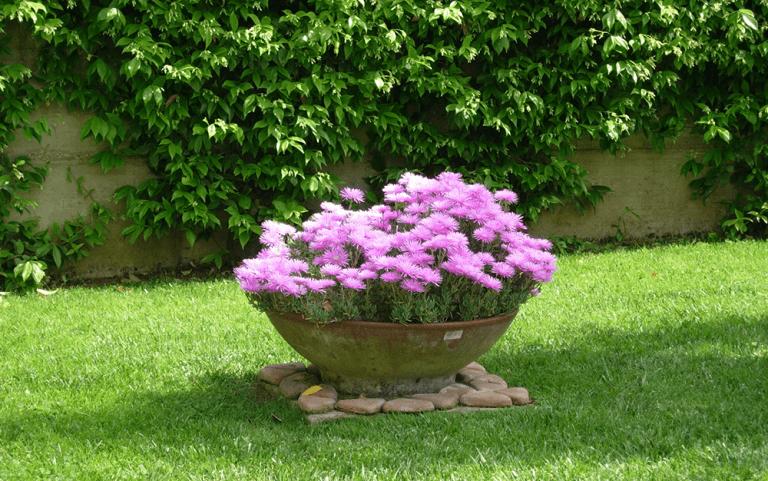 Vaso di fiori rosa in un giardino