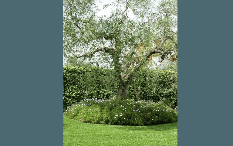 albero in mezzo a un giardino