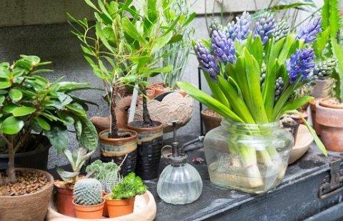 piccole piante grasse
