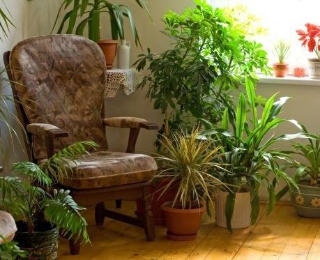 piante per interni