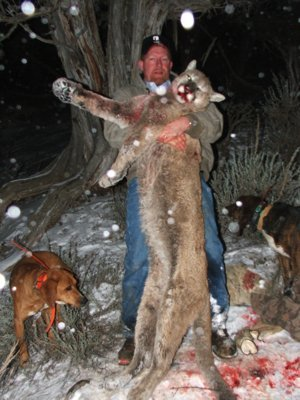 mountain lion hunting guides