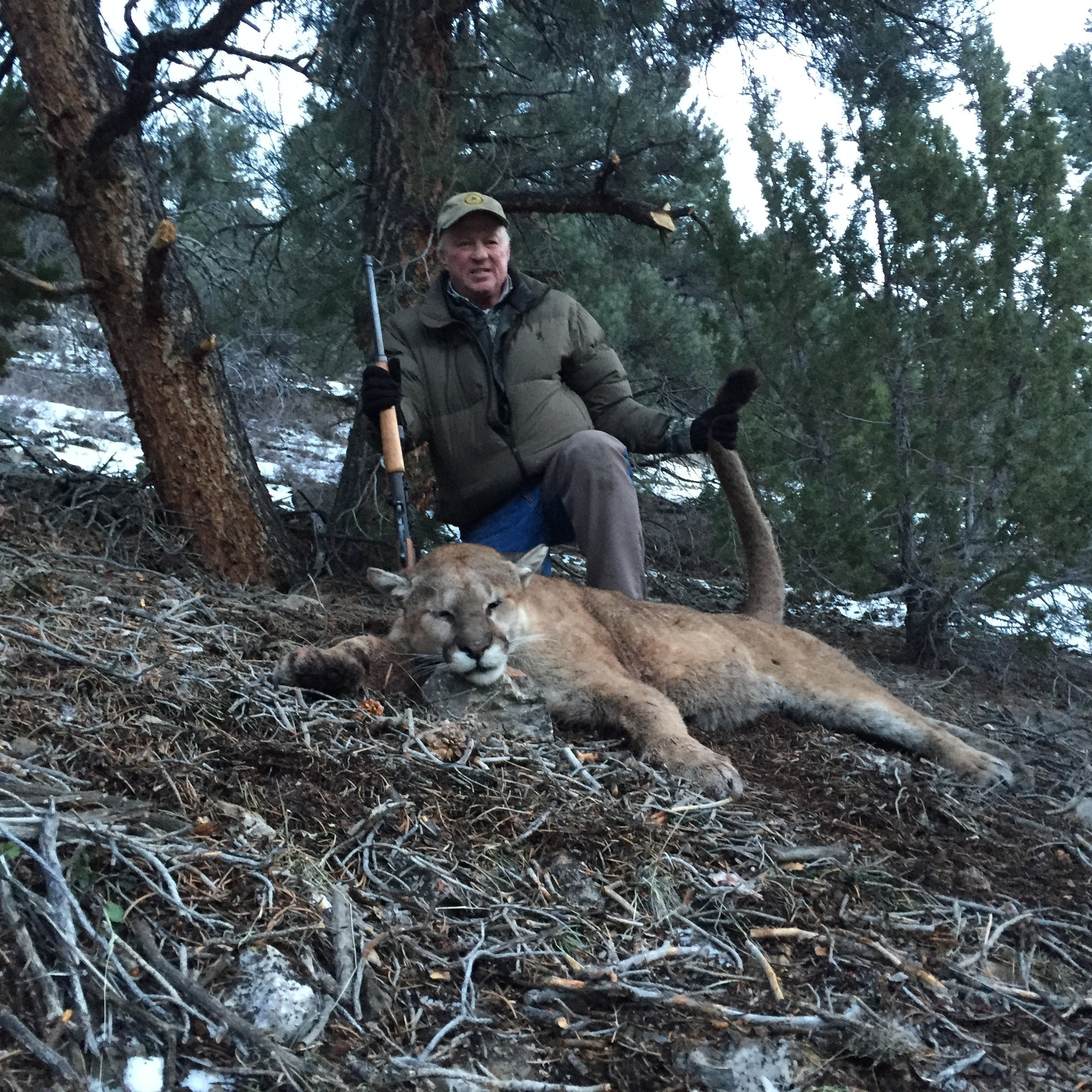 mountain lions in nevada