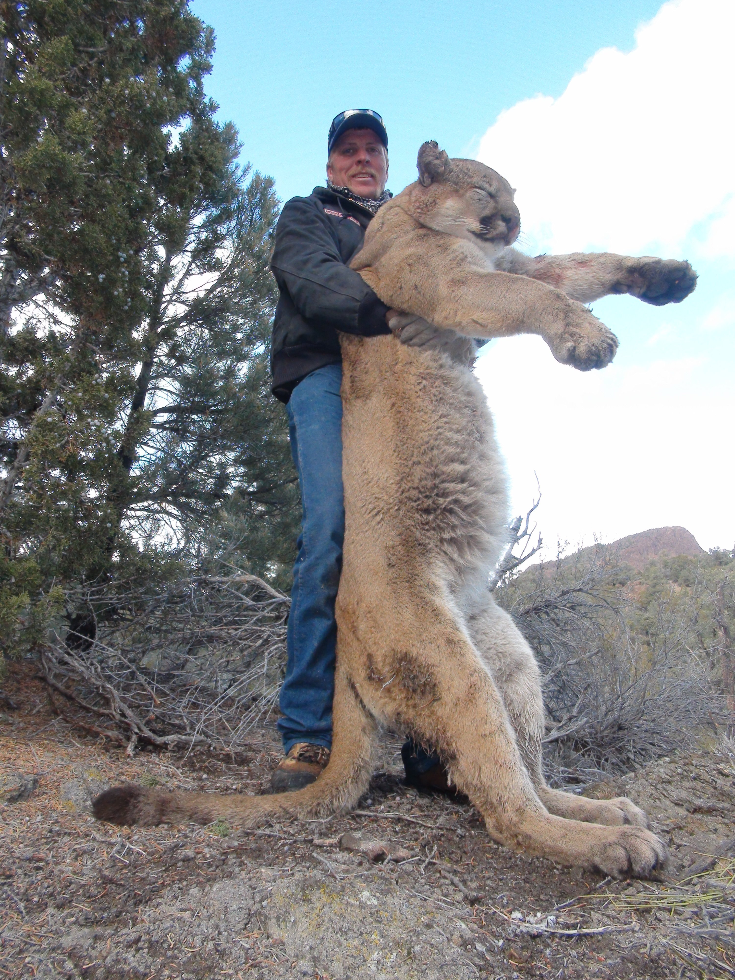 guided mountain lion hunts