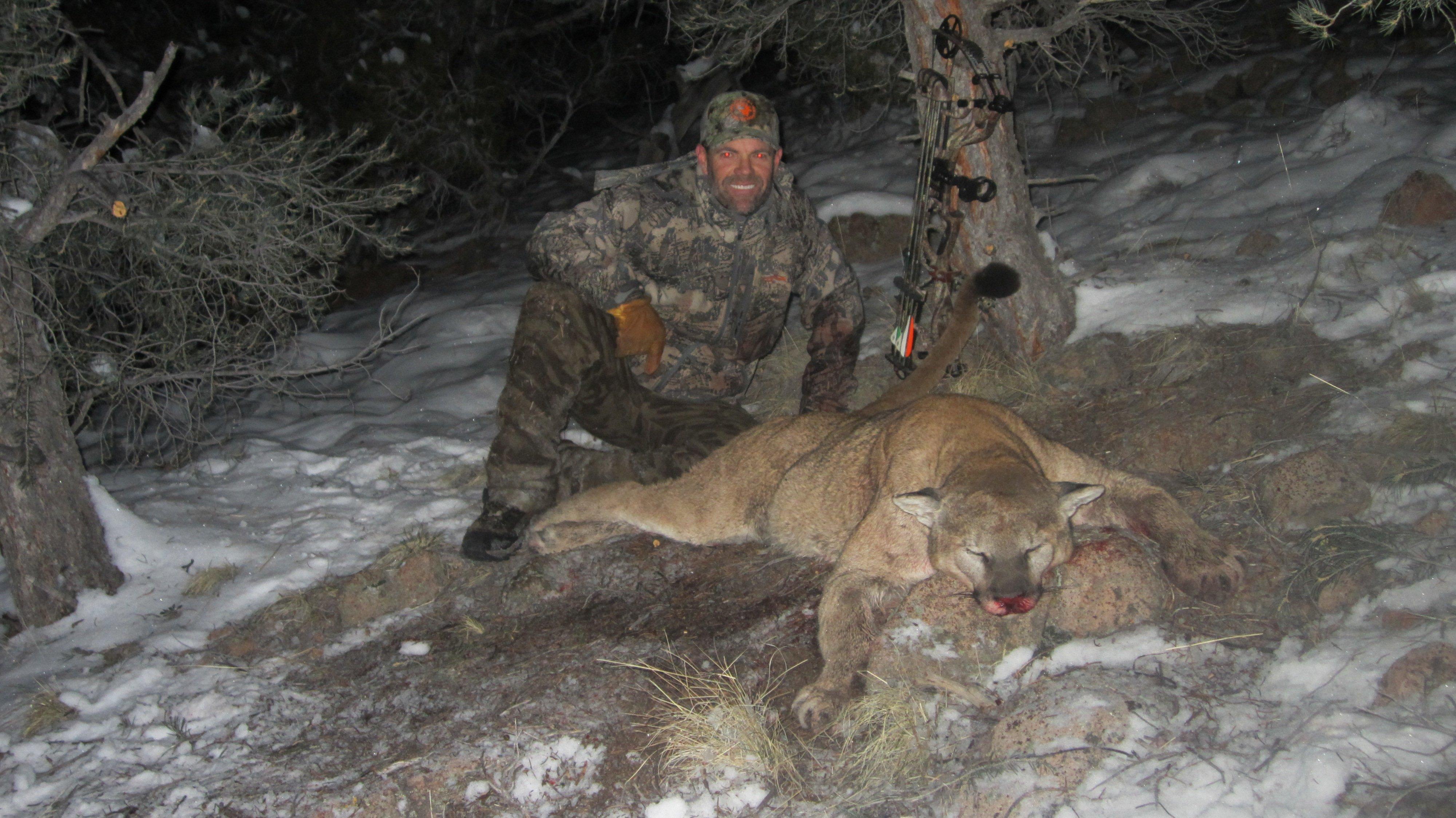 mountain lion nevada