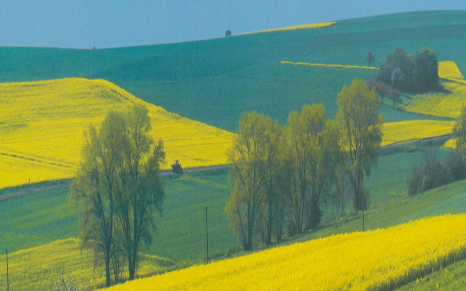 landscape with rapeseed fields