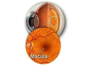 area macula