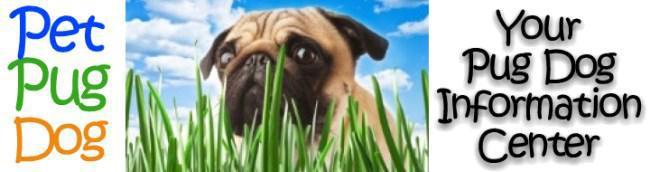 pug dog information banner