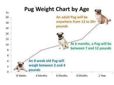 Pug dog growth chart