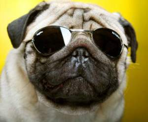 Pugs Sunglasses Reviews United Nations System Chief Executives