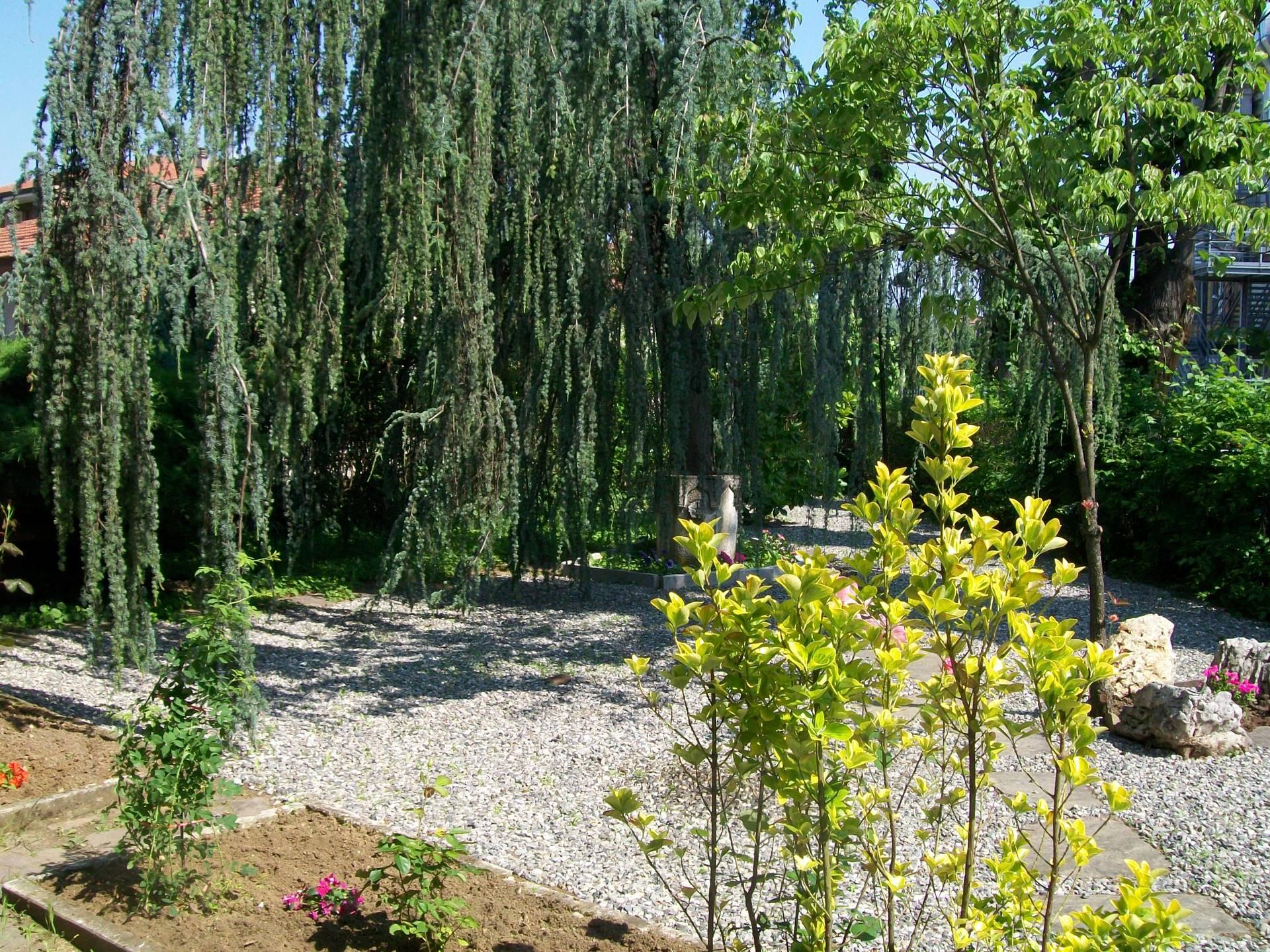 giardino con piante ed alberi