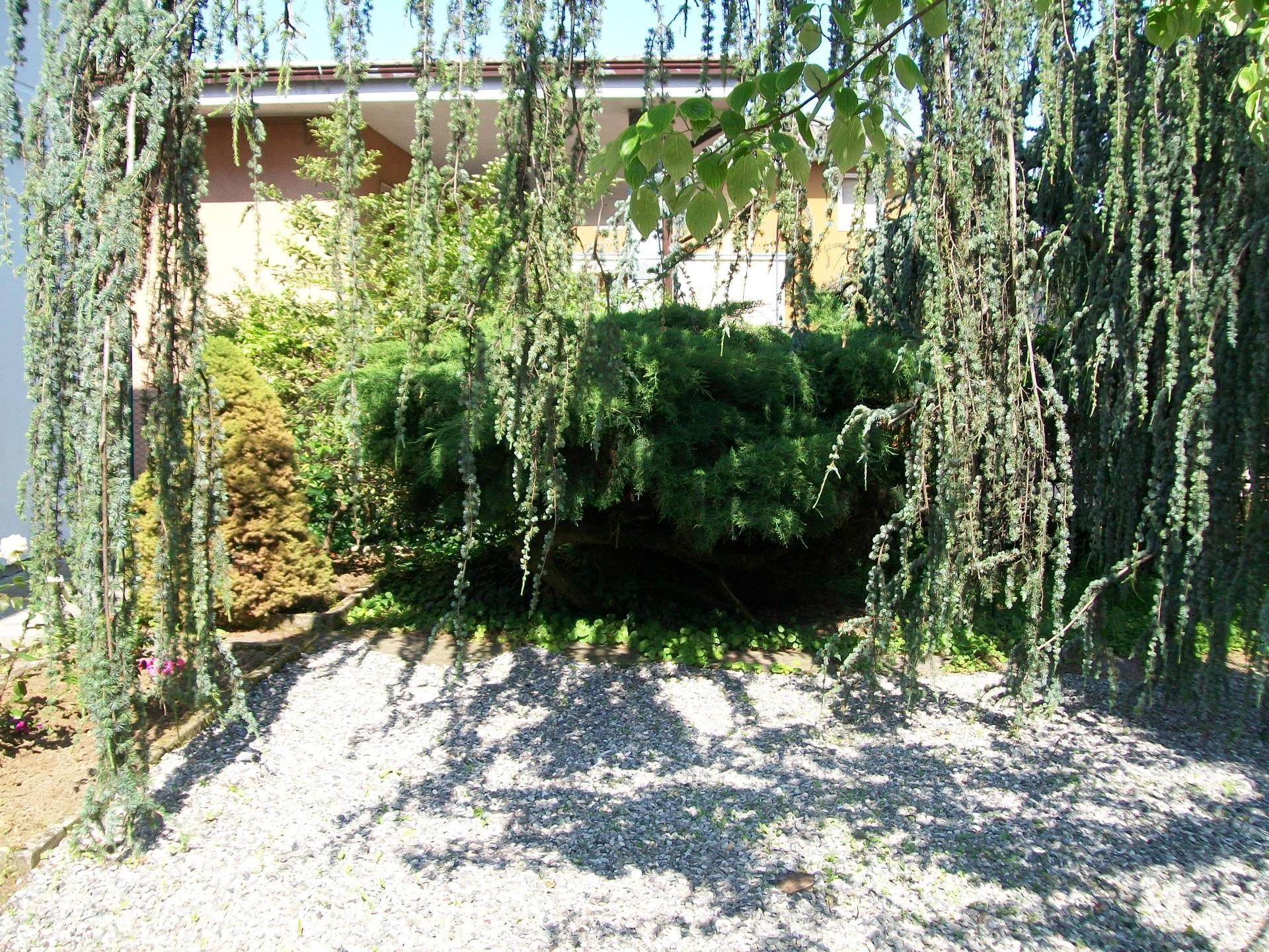 giardino con salici