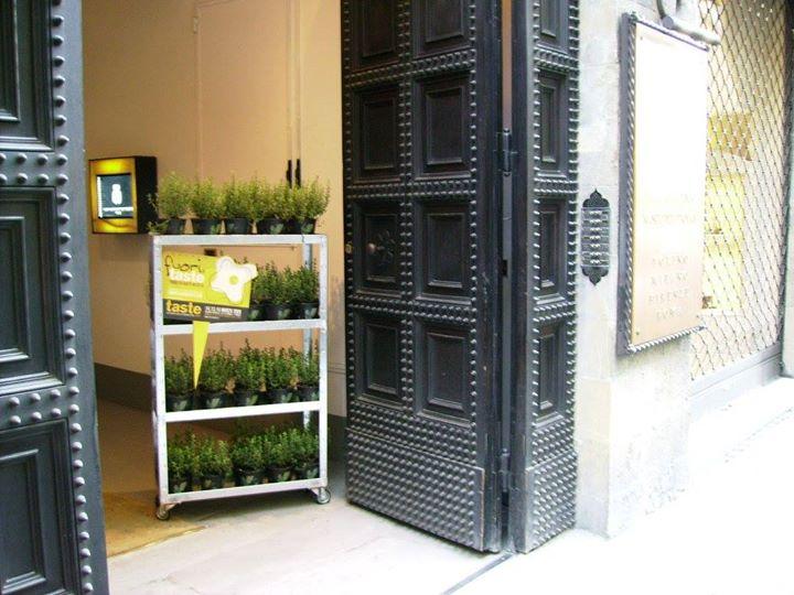 Scaffale con piante all'entrata di un palazzo