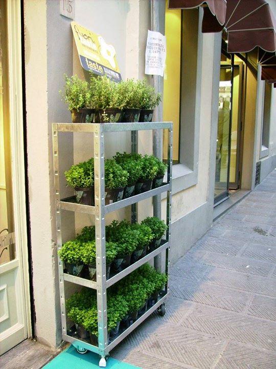 Prospettiva di scaffale con piante