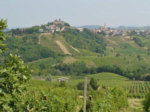 produzione di vino pinot