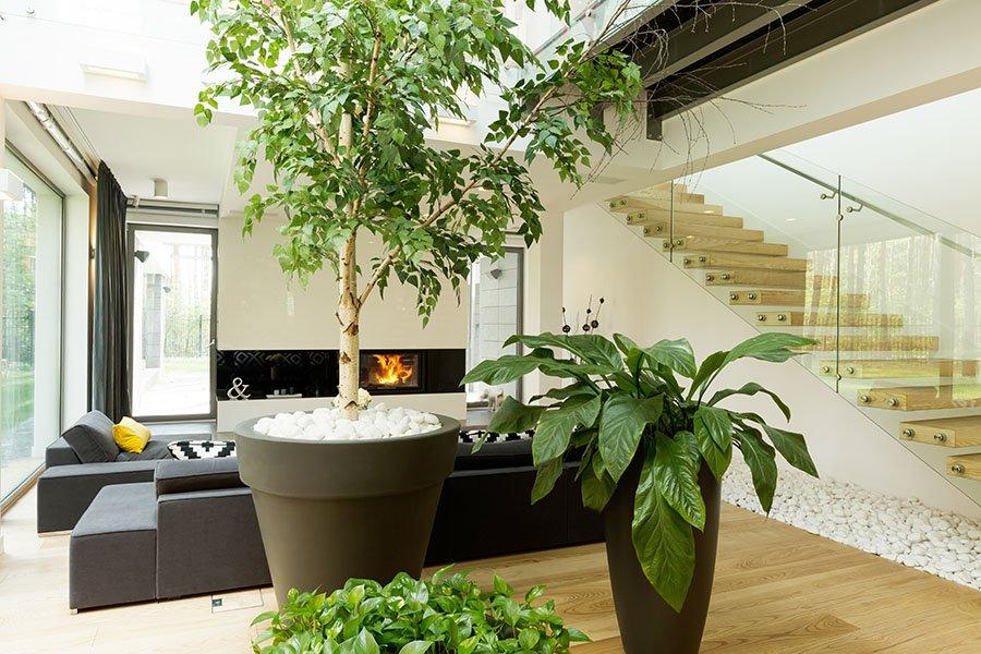 Piante in una stanza di alto design