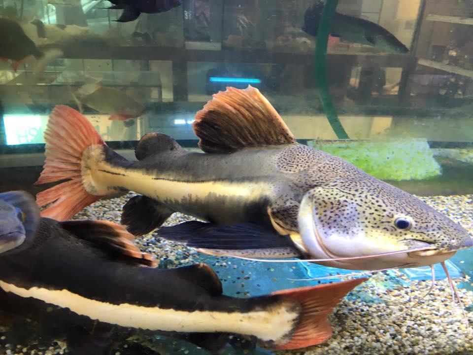 due pesci sul fondo di un acquario