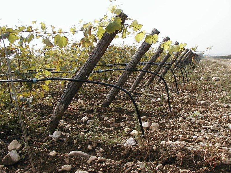 Impianto d'irrigazione di una vigna