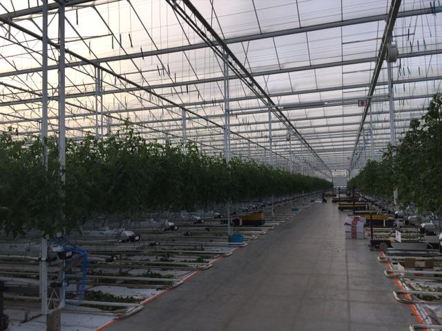 Impianto d'irrigazione a serra