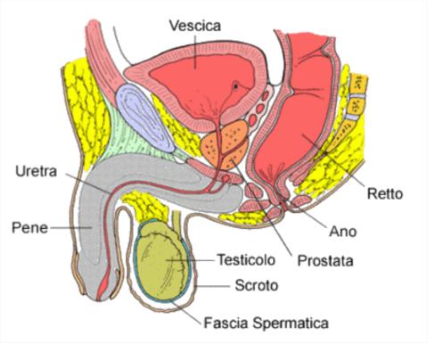 Urologo Roma