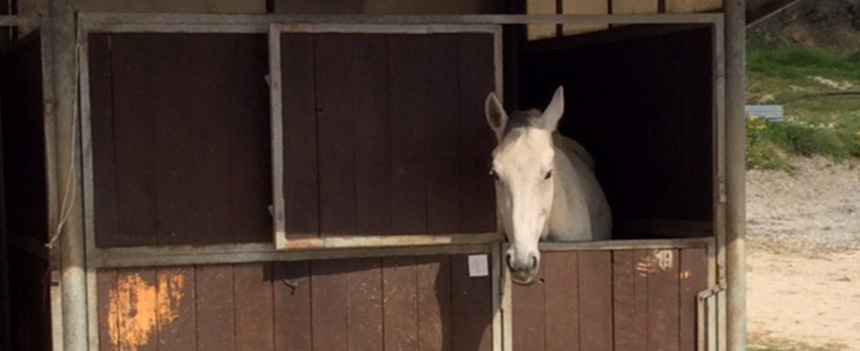 cavallo che si affaccia dai box