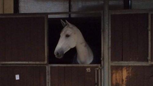 cavallo nel box