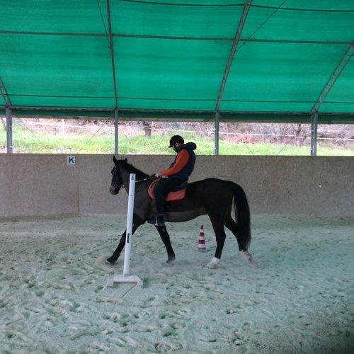 lezione di equitazione nel maneggio coperto