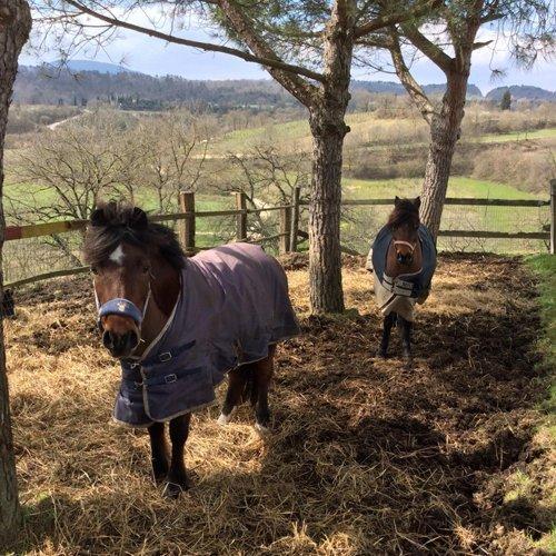 cavalli nel recinto esterno
