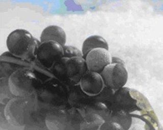 Criomacerazione utilizzando pellets