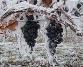 Criomacerazione dell'uva
