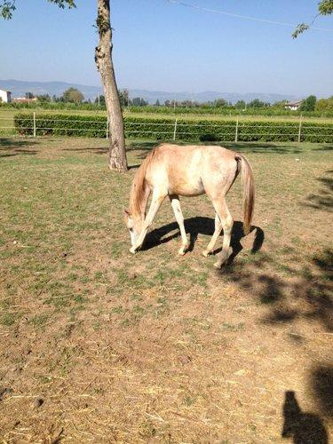 cavallo dentro un recinto