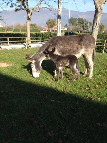 asino con cucciolo mentre mangiano l`erba