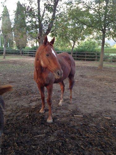 cavallo marrone dentro un recinto