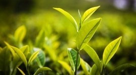 manutenzione di aree verdi, giardinaggio professionisti, esperienza pluriennale
