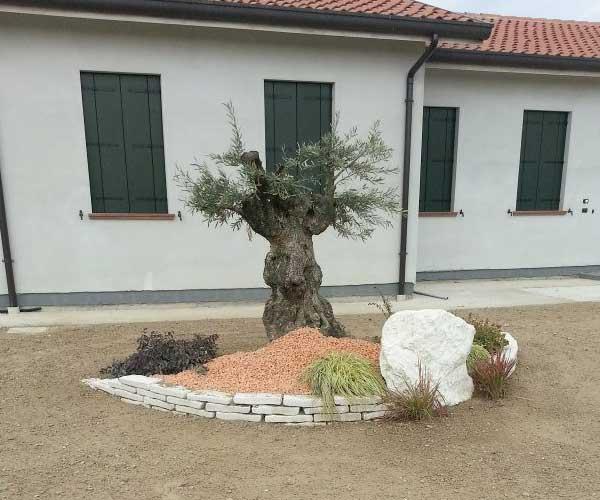 un'aiuola con sassi e piante e un albero in mezzo, dietro una casa con facciata bianca e persiane verdi