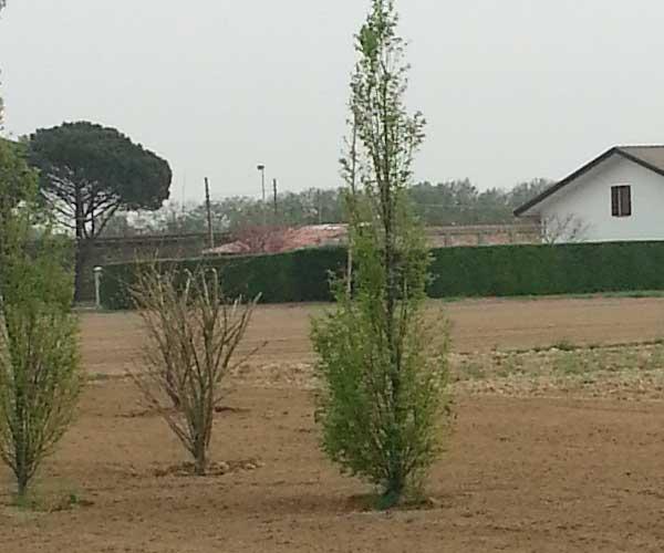 terreno con alberi e in lontananza vista di una siepe e di una villa