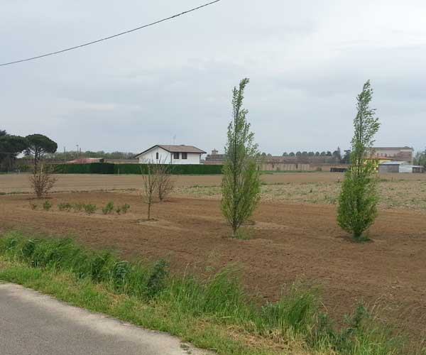 Vista dalla strada di un terreno con alberi sparsi, e delle ville con siepe intorno