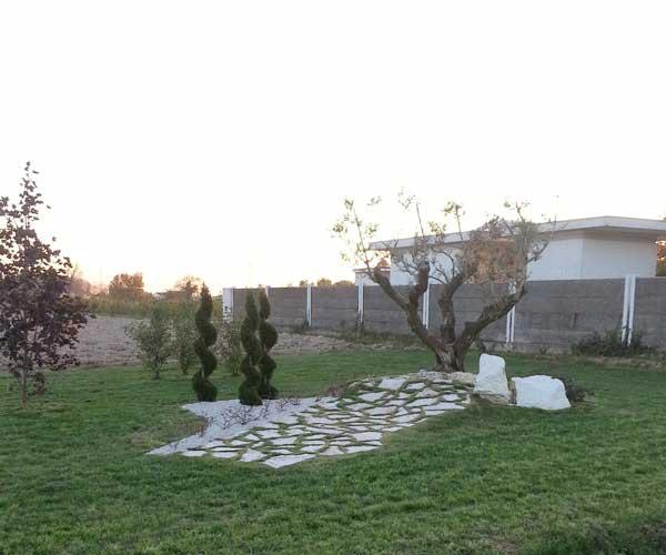 Vista di un prato durante il tramonto, alberi tagliati a spirale e composizione di sassi bianchi