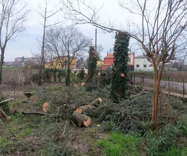 Vista di alberi senza foglie,alberi tagliati e tronchi caduti per  terra