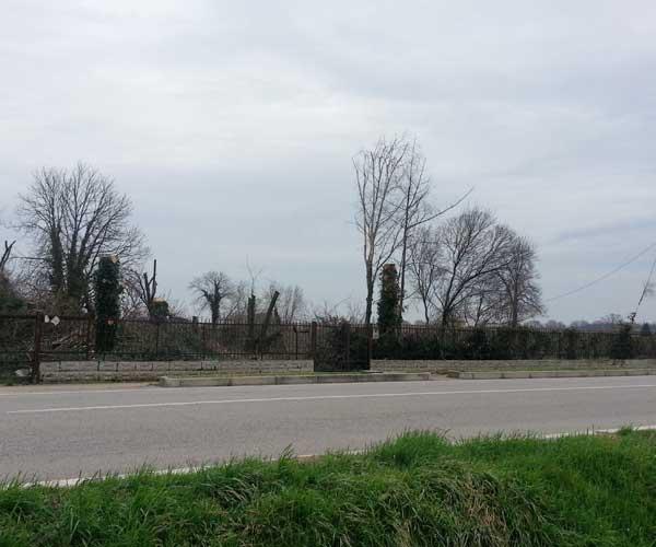 ista dalla strada di alberi in uno spazio circondato con ringhiera e cancello