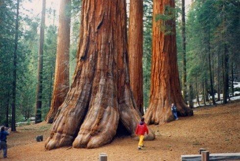 tour alla scoperta dei parchi americani