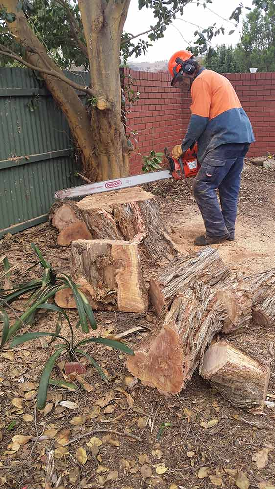 all tree and stump removal checking the chainsaw