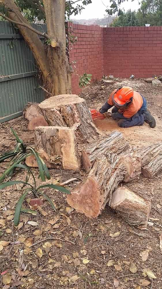 all tree and stump removal removing stumps