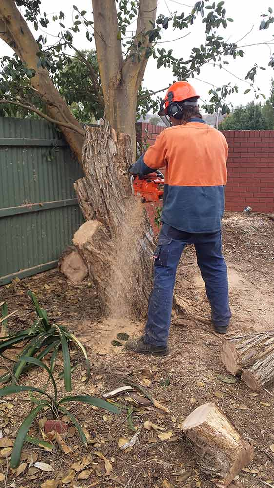 all tree and stump removal removing tree